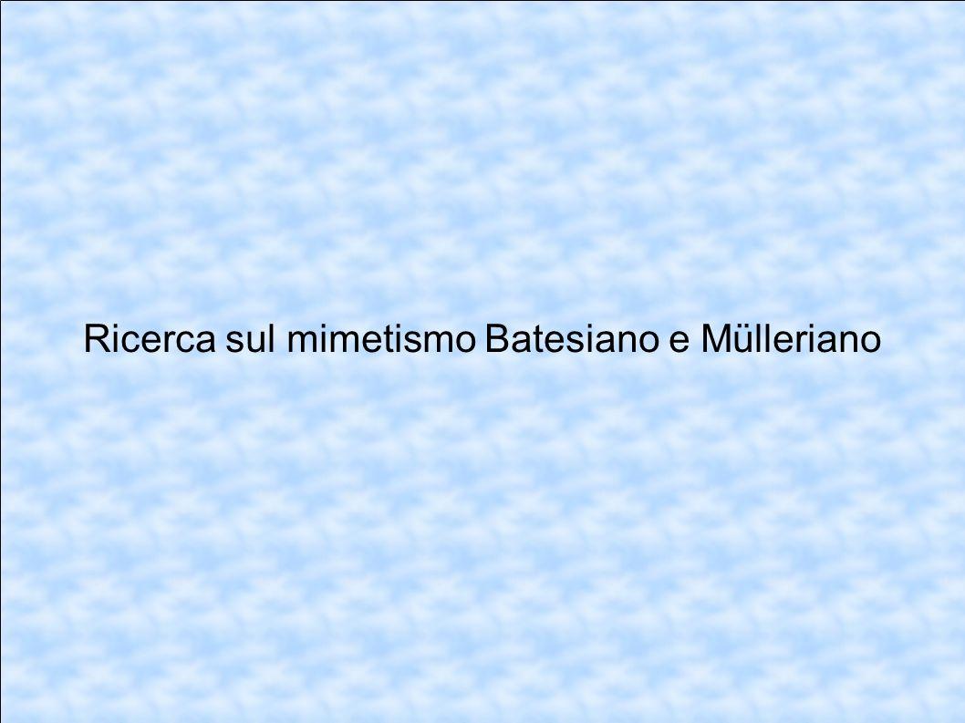 Ricerca sul mimetismo Batesiano e Mülleriano