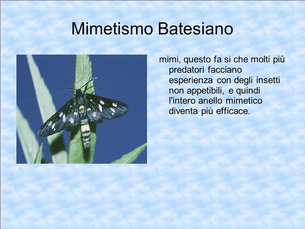 Mimetismo Batesiano mimi, questo fa si che molti più predatori facciano esperienza con degli insetti non appetibili, e quindi l'intero anello mimetico