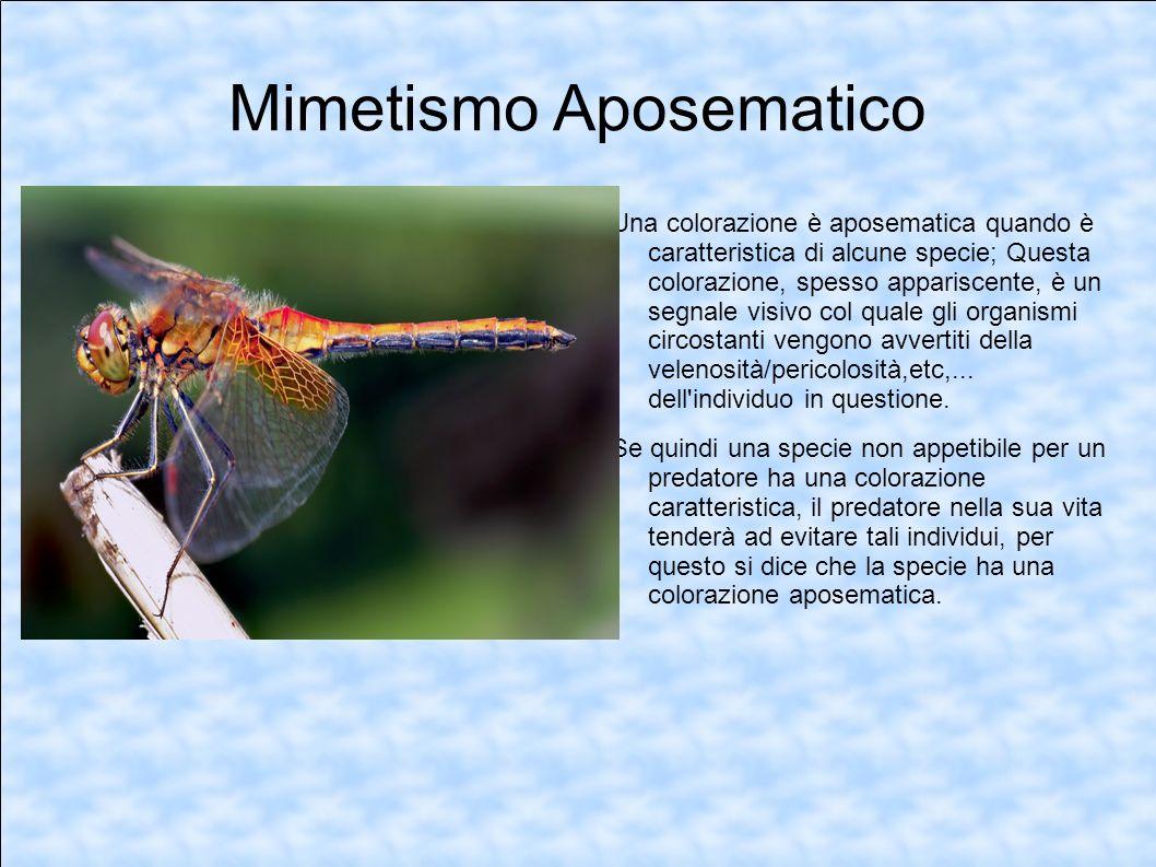 Mimetismo Aposematico Una colorazione è aposematica quando è caratteristica di alcune specie; Questa colorazione, spesso appariscente, è un segnale vi