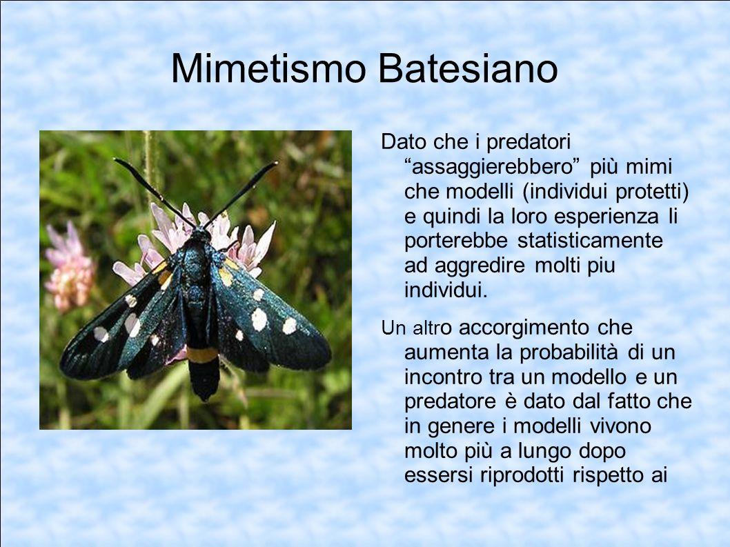 Mimetismo Batesiano Dato che i predatori assaggierebbero più mimi che modelli (individui protetti) e quindi la loro esperienza li porterebbe statistic