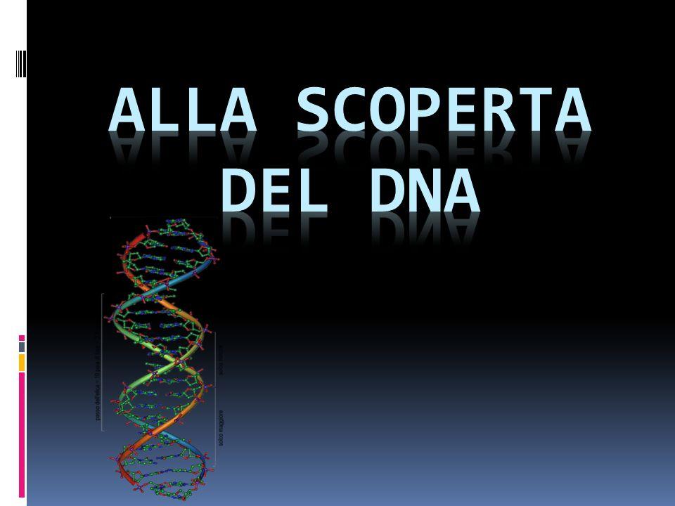 STRUTTURA DEL GENOMA Nel genoma, l informazione è conservata in sequenze di DNA chiamate geni.
