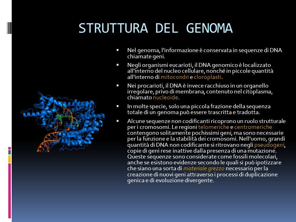 STRUTTURA DEL GENOMA Nel genoma, l'informazione è conservata in sequenze di DNA chiamate geni. Negli organismi eucarioti, il DNA genomico è localizzat