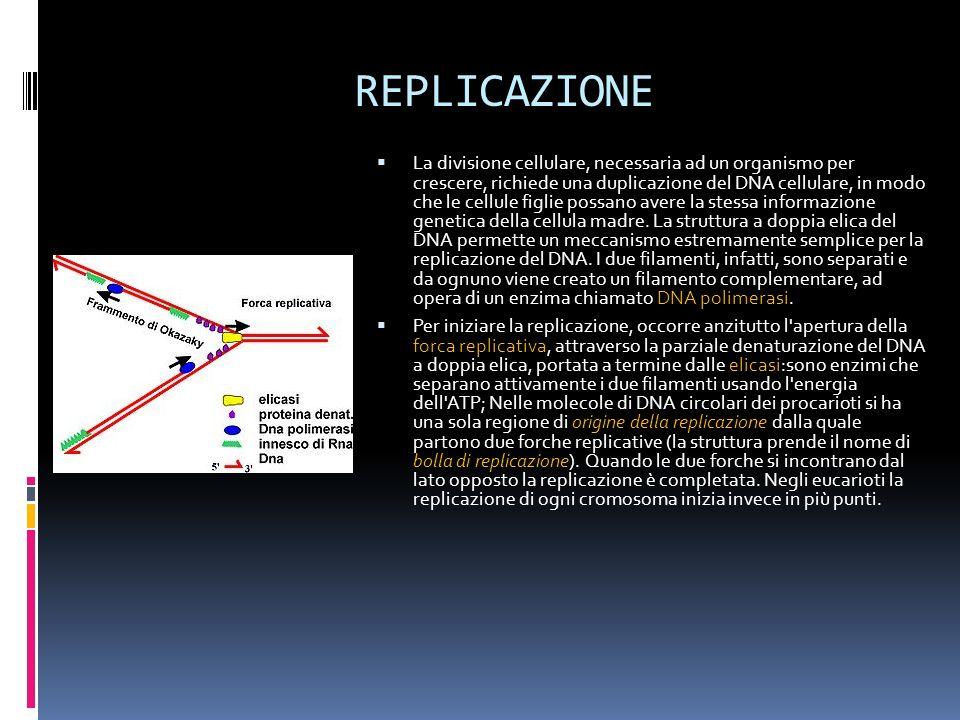 REPLICAZIONE La divisione cellulare, necessaria ad un organismo per crescere, richiede una duplicazione del DNA cellulare, in modo che le cellule figl