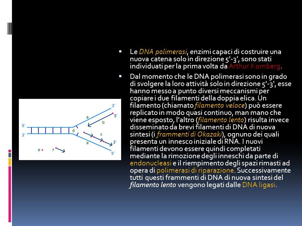 Le DNA polimerasi, enzimi capaci di costruire una nuova catena solo in direzione 5'-3', sono stati individuati per la prima volta da Arthur Kornberg.