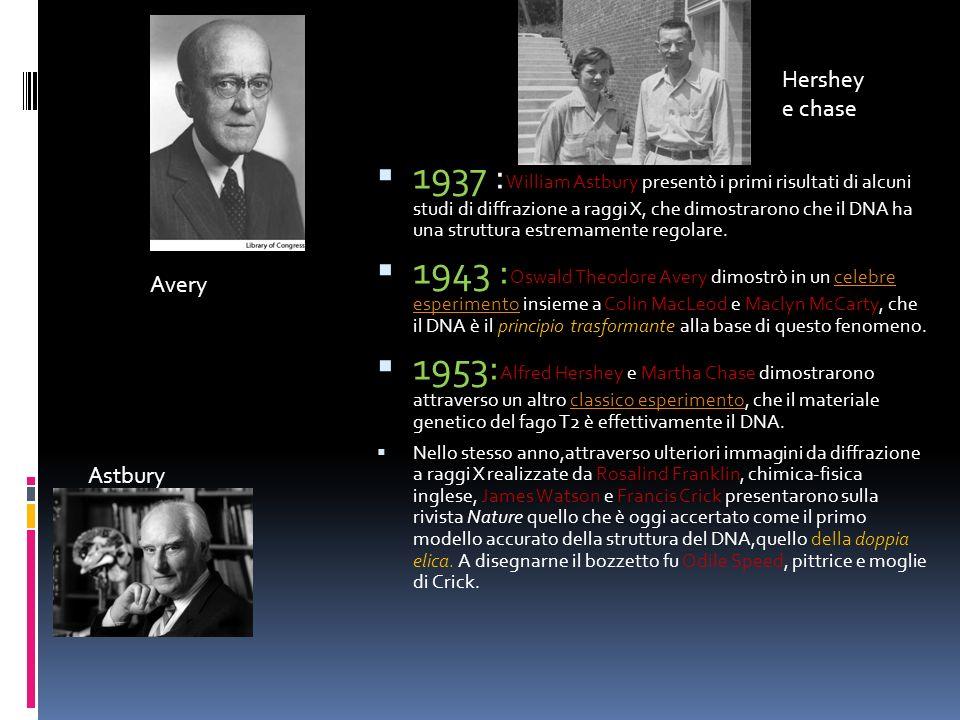 1937 : William Astbury presentò i primi risultati di alcuni studi di diffrazione a raggi X, che dimostrarono che il DNA ha una struttura estremamente