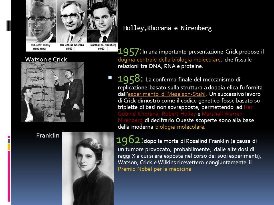 Holley,Khorana e Nirenberg Watson e Crick Franklin 1957: In una importante presentazione Crick propose il dogma centrale della biologia molecolare, ch