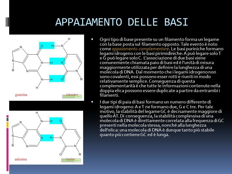 APPAIAMENTO DELLE BASI Ogni tipo di base presente su un filamento forma un legame con la base posta sul filamento opposto. Tale evento è noto come app