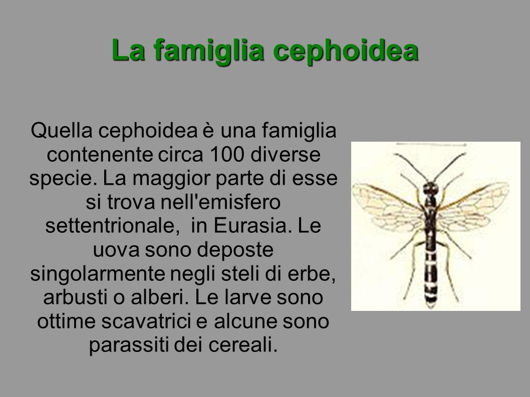 La famiglia cephoidea Quella cephoidea è una famiglia contenente circa 100 diverse specie. La maggior parte di esse si trova nell'emisfero settentrion