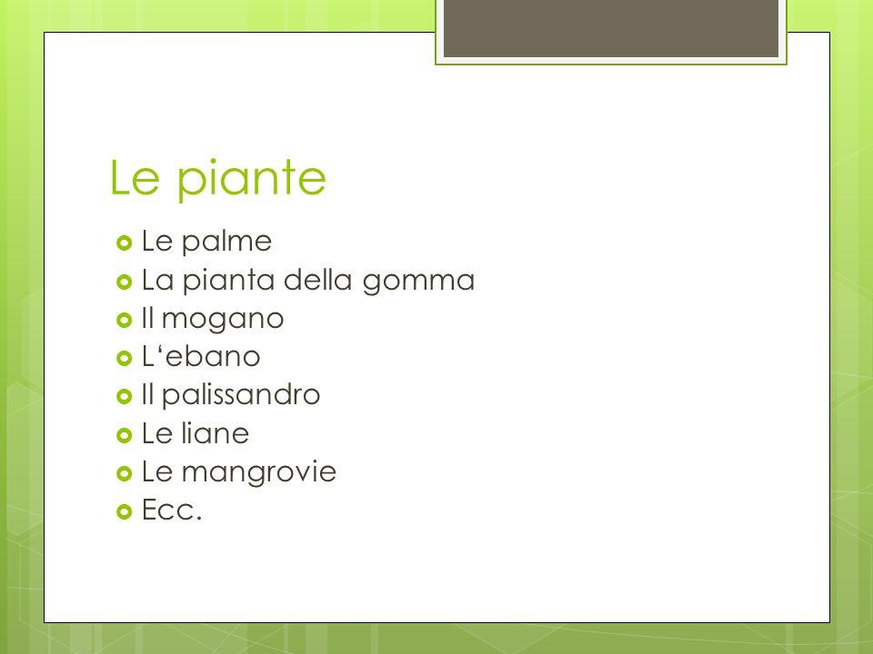 Le piante Le palme La pianta della gomma Il mogano Lebano Il palissandro Le liane Le mangrovie Ecc.