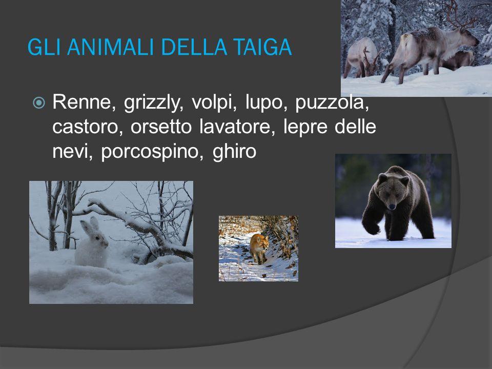 GLI ANIMALI DELLA TUNDRA ermellini, visoni,castori, lontre, orsi polari e soprattutto renne.
