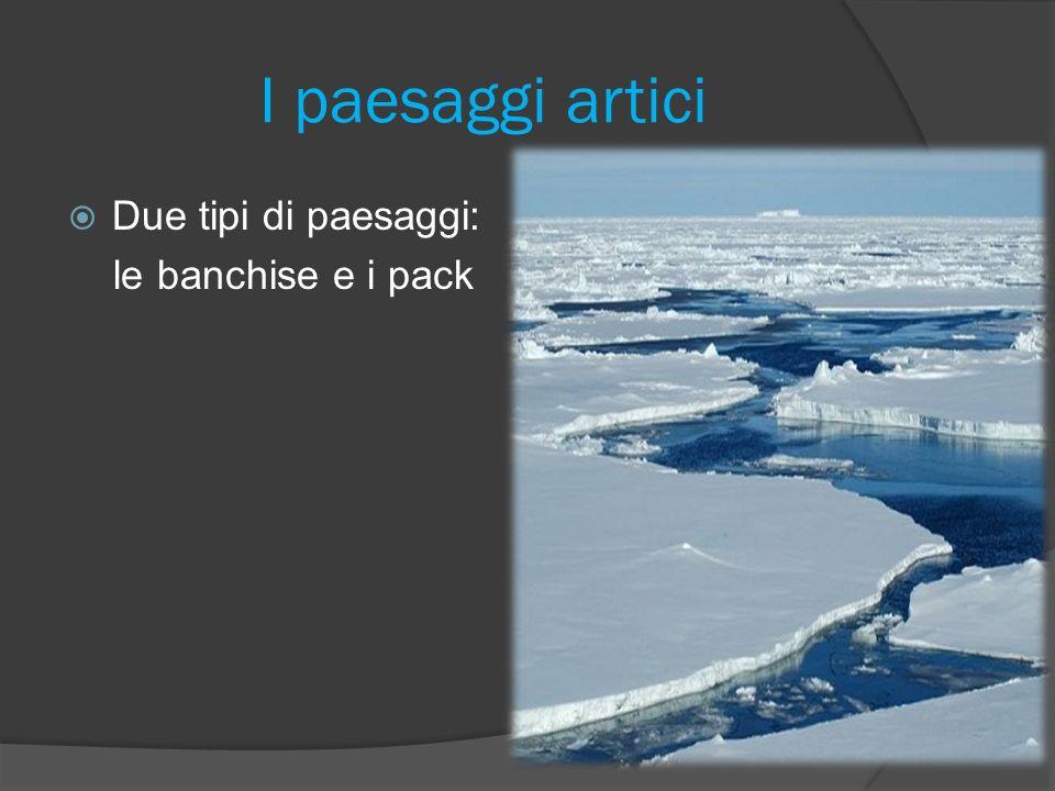 I paesaggi artici Due tipi di paesaggi: le banchise e i pack