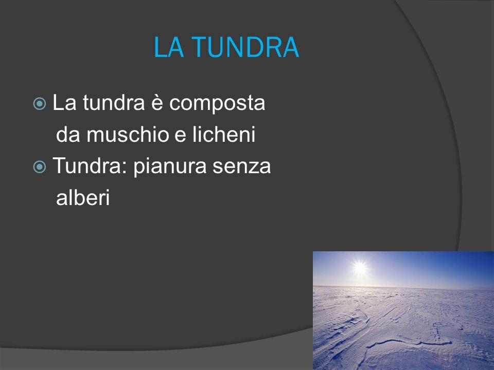 LA TUNDRA La tundra è composta da muschio e licheni Tundra: pianura senza alberi