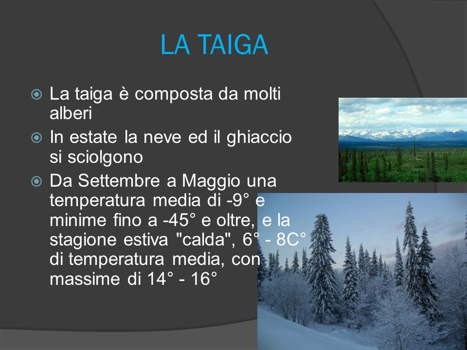 LA TAIGA La taiga è composta da molti alberi In estate la neve ed il ghiaccio si sciolgono Da Settembre a Maggio una temperatura media di -9° e minime fino a -45° e oltre, e la stagione estiva calda , 6° - 8C° di temperatura media, con massime di 14° - 16°