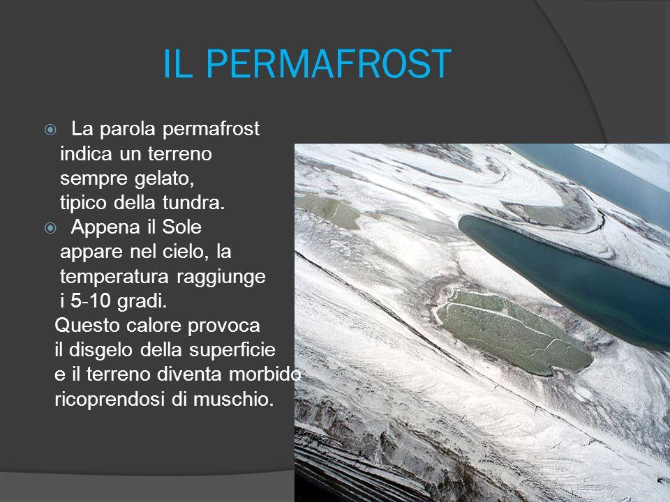 IL PERMAFROST La parola permafrost indica un terreno sempre gelato, tipico della tundra.