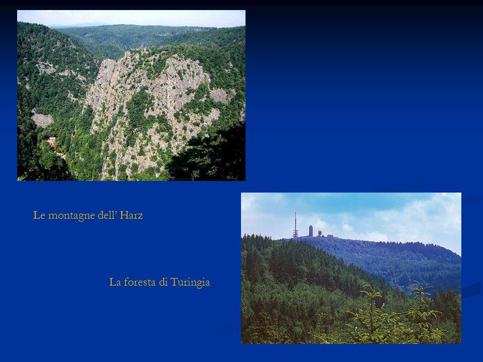 Le montagne dell Harz La foresta di Turingia