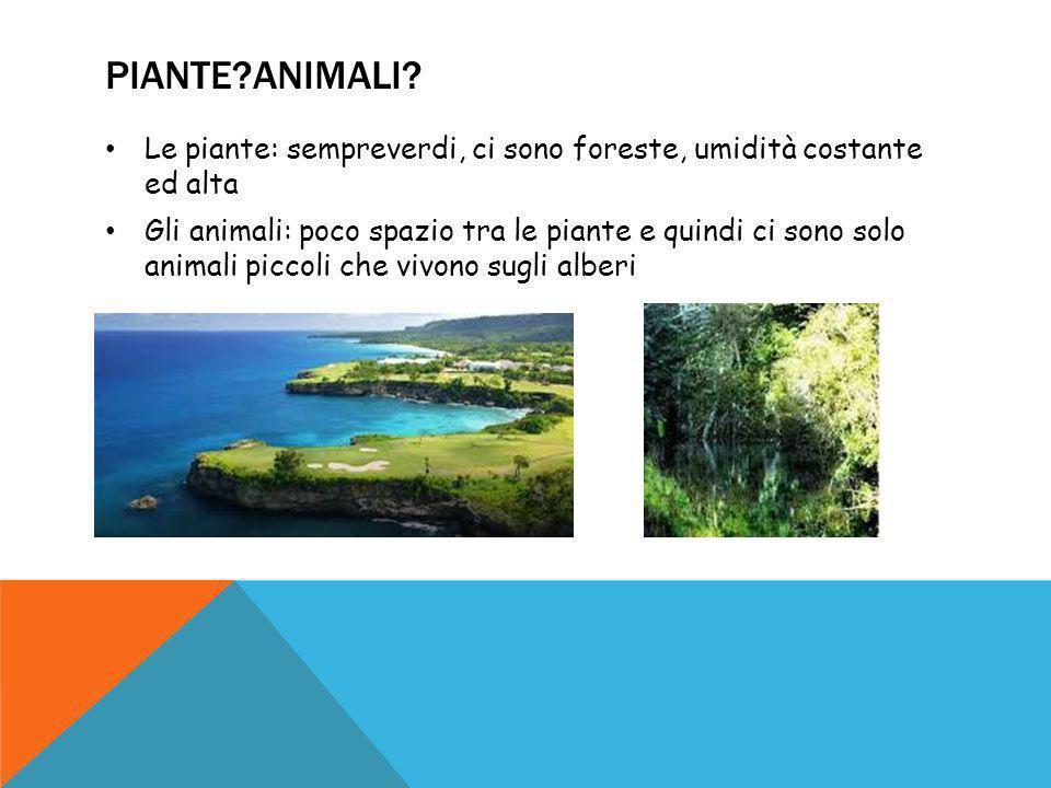 PIANTE?ANIMALI? Le piante: sempreverdi, ci sono foreste, umidità costante ed alta Gli animali: poco spazio tra le piante e quindi ci sono solo animali