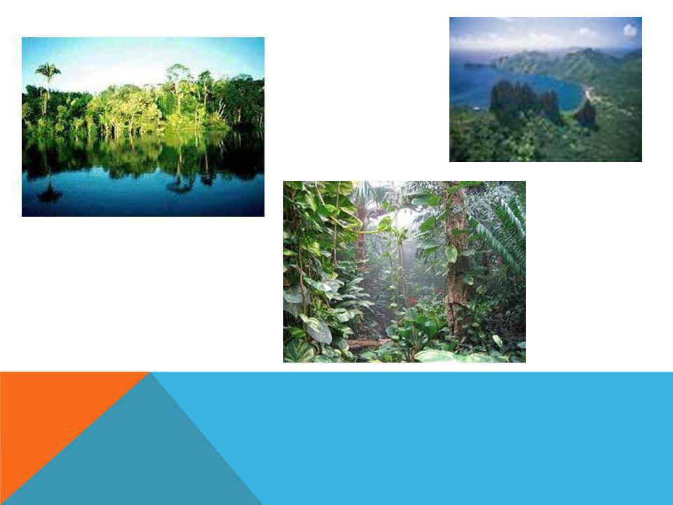 COM´È IL CLIMA EQUATORIALE Il clima equatoriale e´ un clima tropicale che copre le latitudini della Terra.