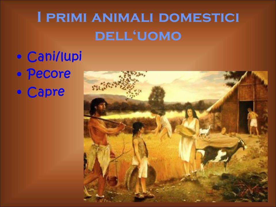 I primi animali domestici delluomo Cani/lupi Pecore Capre
