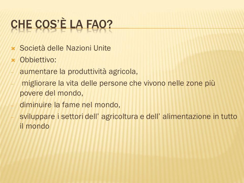 Società delle Nazioni Unite Obbiettivo: aumentare la produttività agricola, migliorare la vita delle persone che vivono nelle zone più povere del mond