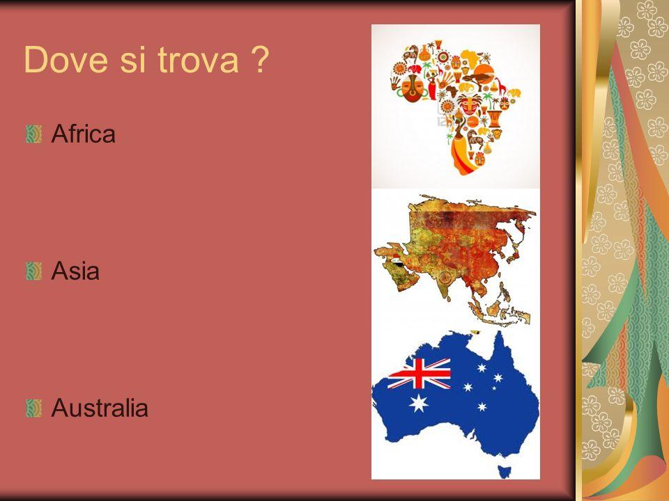 Dove si trova ? Africa Asia Australia