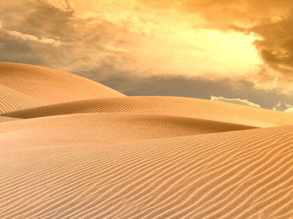 Gli animali tipici cammelli dromedari suricati lucertole serpenti animali piccoli come insetti, ragni, scorpioni ecc.