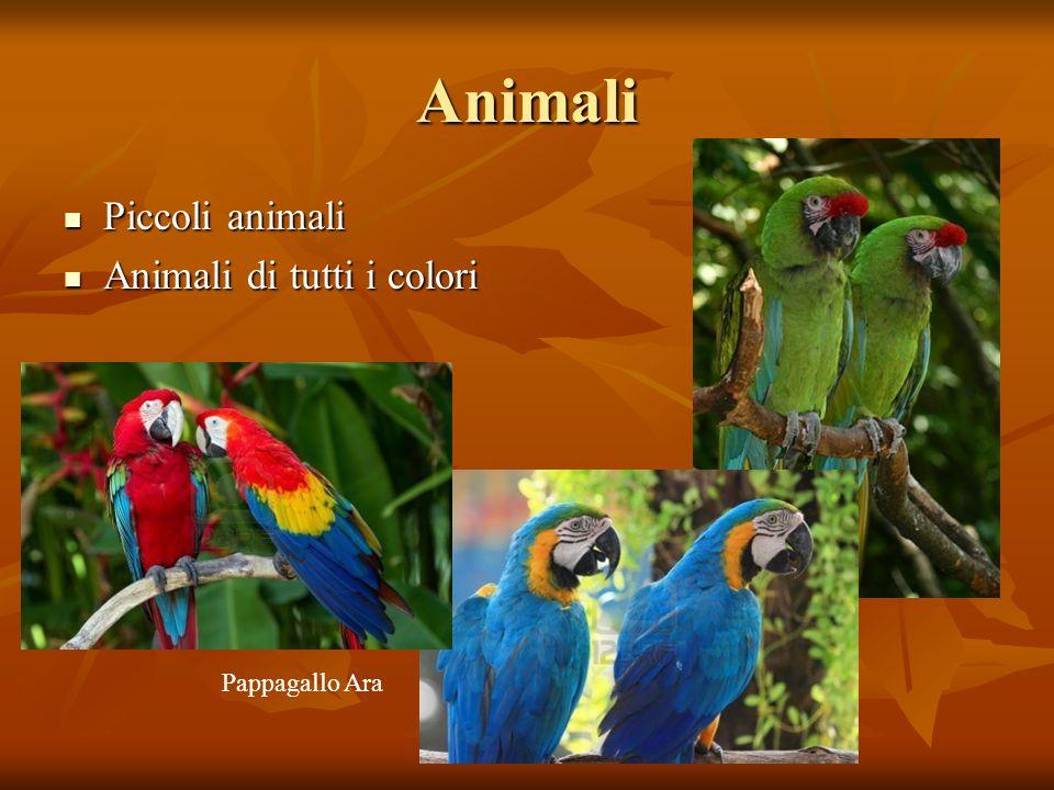 Animali Piccoli animali Piccoli animali Animali di tutti i colori Animali di tutti i colori Pappagallo Ara