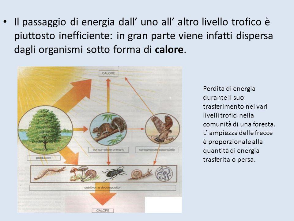 Il passaggio di energia dall uno all altro livello trofico è piuttosto inefficiente: in gran parte viene infatti dispersa dagli organismi sotto forma di calore.