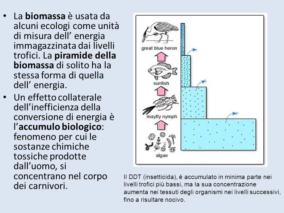 La biomassa è usata da alcuni ecologi come unità di misura dell energia immagazzinata dai livelli trofici.