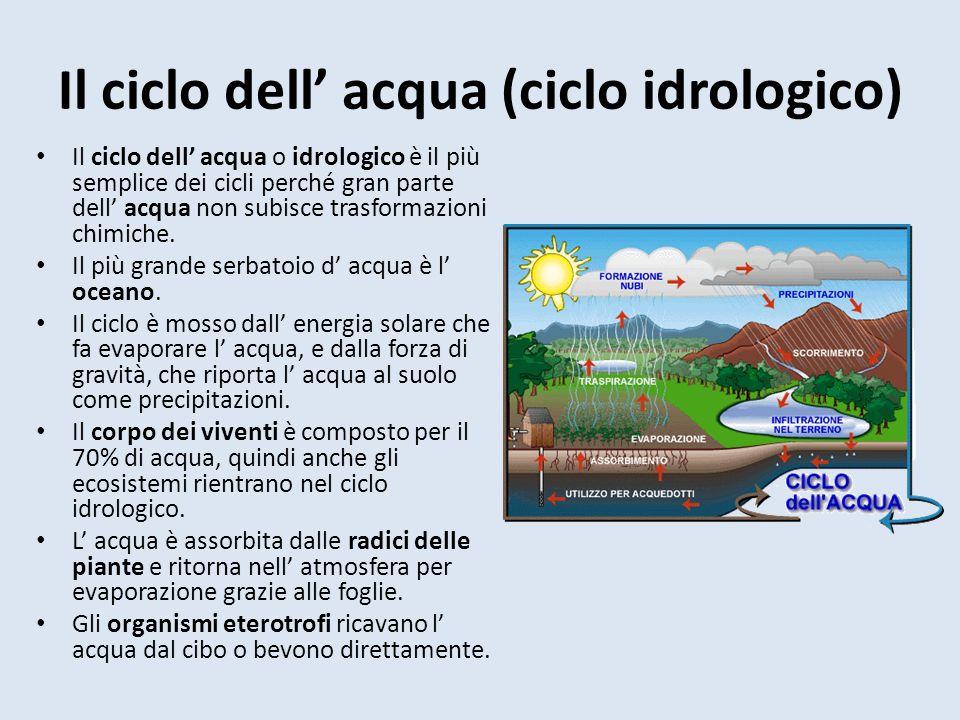 Il ciclo dell acqua (ciclo idrologico) Il ciclo dell acqua o idrologico è il più semplice dei cicli perché gran parte dell acqua non subisce trasformazioni chimiche.