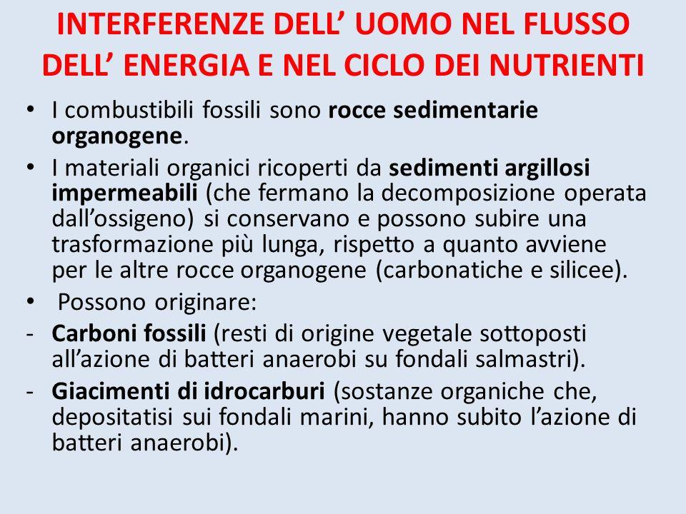 INTERFERENZE DELL UOMO NEL FLUSSO DELL ENERGIA E NEL CICLO DEI NUTRIENTI I combustibili fossili sono rocce sedimentarie organogene. I materiali organi