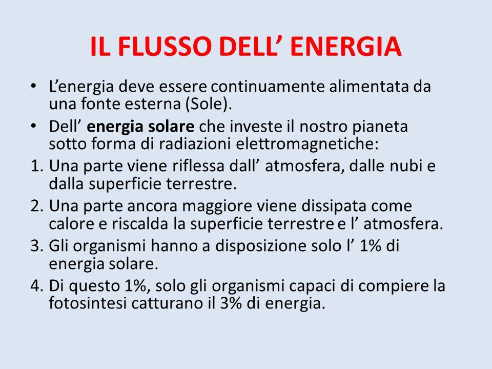 IL FLUSSO DELL ENERGIA Lenergia deve essere continuamente alimentata da una fonte esterna (Sole). Dell energia solare che investe il nostro pianeta so