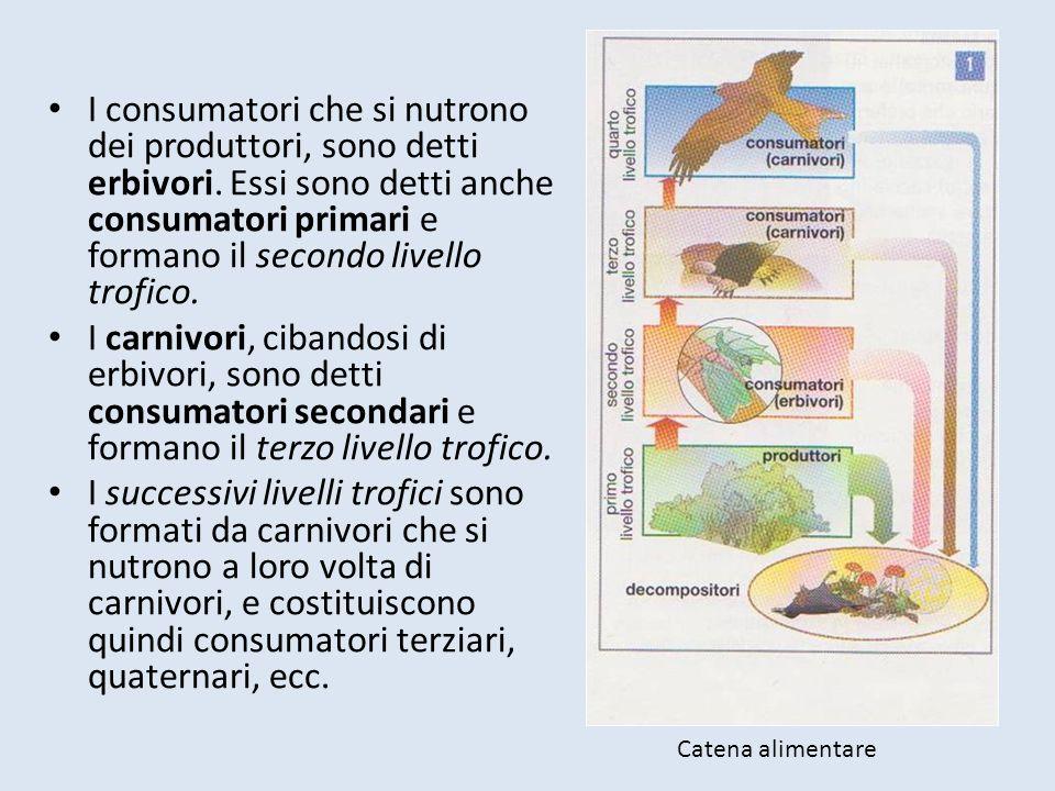 I consumatori che si nutrono dei produttori, sono detti erbivori. Essi sono detti anche consumatori primari e formano il secondo livello trofico. I ca