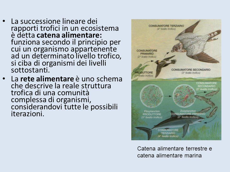 La successione lineare dei rapporti trofici in un ecosistema è detta catena alimentare: funziona secondo il principio per cui un organismo appartenent