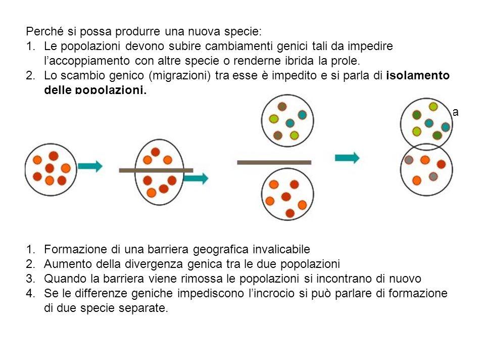 Se le specie appartengono ad una stessa area geografica, in questo caso si parlerà di speciazione simpatrica.
