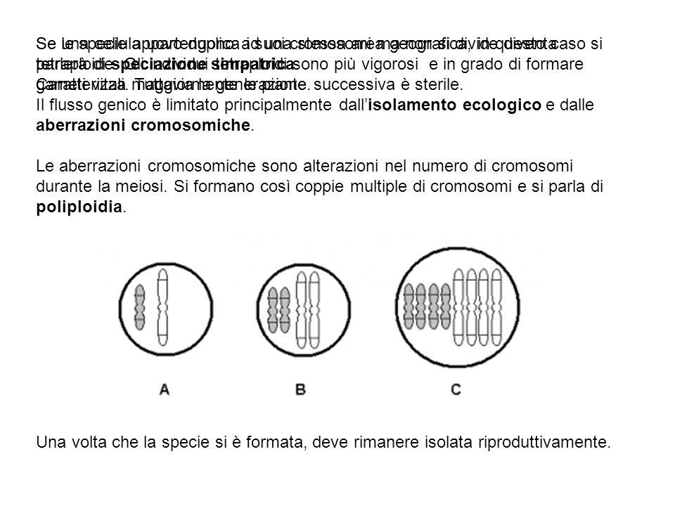 Se le specie appartengono ad una stessa area geografica, in questo caso si parlerà di speciazione simpatrica. Caratterizza maggiormente le piante. Il