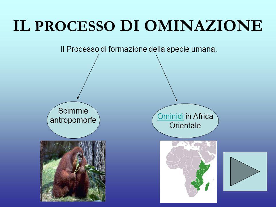 IL PROCESSO DI OMINAZIONE Il Processo di formazione della specie umana. Scimmie antropomorfe OminidiOminidi in Africa Orientale