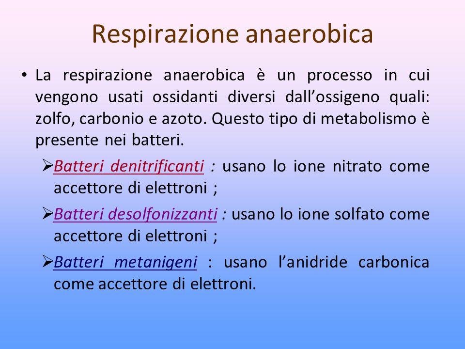 Respirazione anaerobica La respirazione anaerobica è un processo in cui vengono usati ossidanti diversi dallossigeno quali: zolfo, carbonio e azoto.