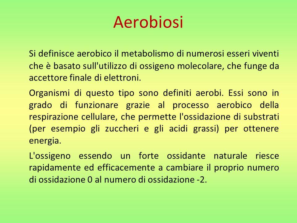 Si definisce aerobico il metabolismo di numerosi esseri viventi che è basato sull utilizzo di ossigeno molecolare, che funge da accettore finale di elettroni.