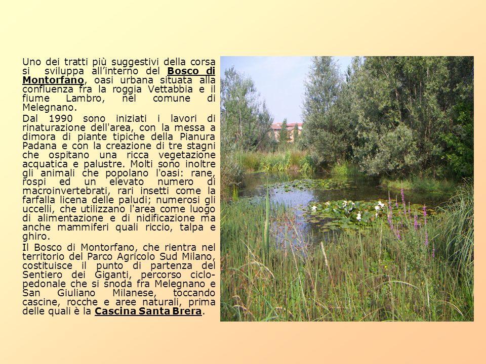 Uno dei tratti più suggestivi della corsa si sviluppa allinterno del Bosco di Montorfano, oasi urbana situata alla confluenza fra la roggia Vettabbia