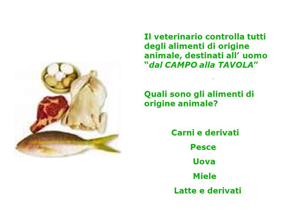 Il veterinario controlla tutti degli alimenti di origine animale, destinati all uomodal CAMPO alla TAVOLA Quali sono gli alimenti di origine animale.