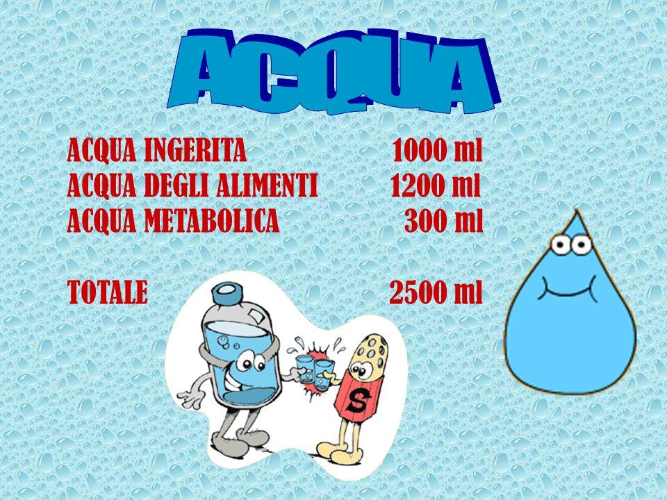 ACQUA INGERITA 1000 ml ACQUA DEGLI ALIMENTI 1200 ml ACQUA METABOLICA 300 ml TOTALE 2500 ml