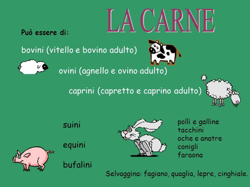 Può essere di: bovini (vitello e bovino adulto) polli e galline tacchini oche e anatre conigli faraona Selvaggina: fagiano, quaglia, lepre, cinghiale.