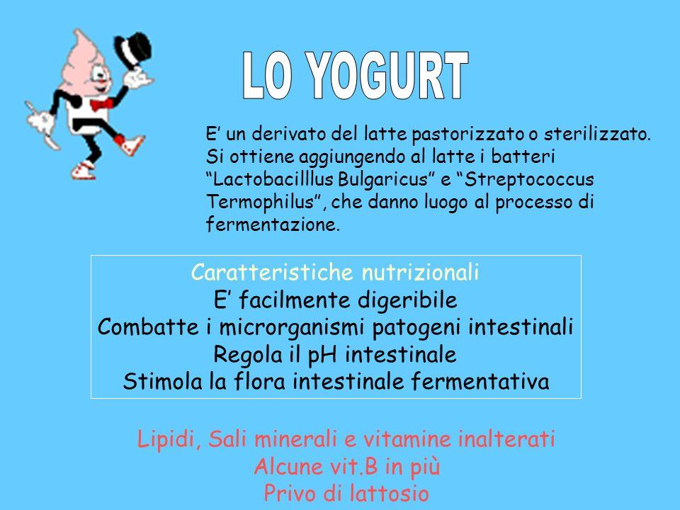 E un derivato del latte pastorizzato o sterilizzato. Si ottiene aggiungendo al latte i batteri Lactobacilllus Bulgaricus e Streptococcus Termophilus,