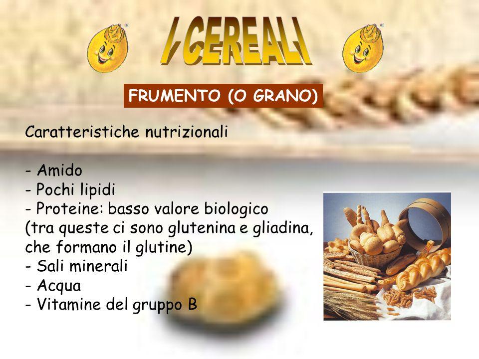 FRUMENTO (O GRANO) Caratteristiche nutrizionali - Amido - Pochi lipidi - Proteine: basso valore biologico (tra queste ci sono glutenina e gliadina, che formano il glutine) - Sali minerali - Acqua - Vitamine del gruppo B
