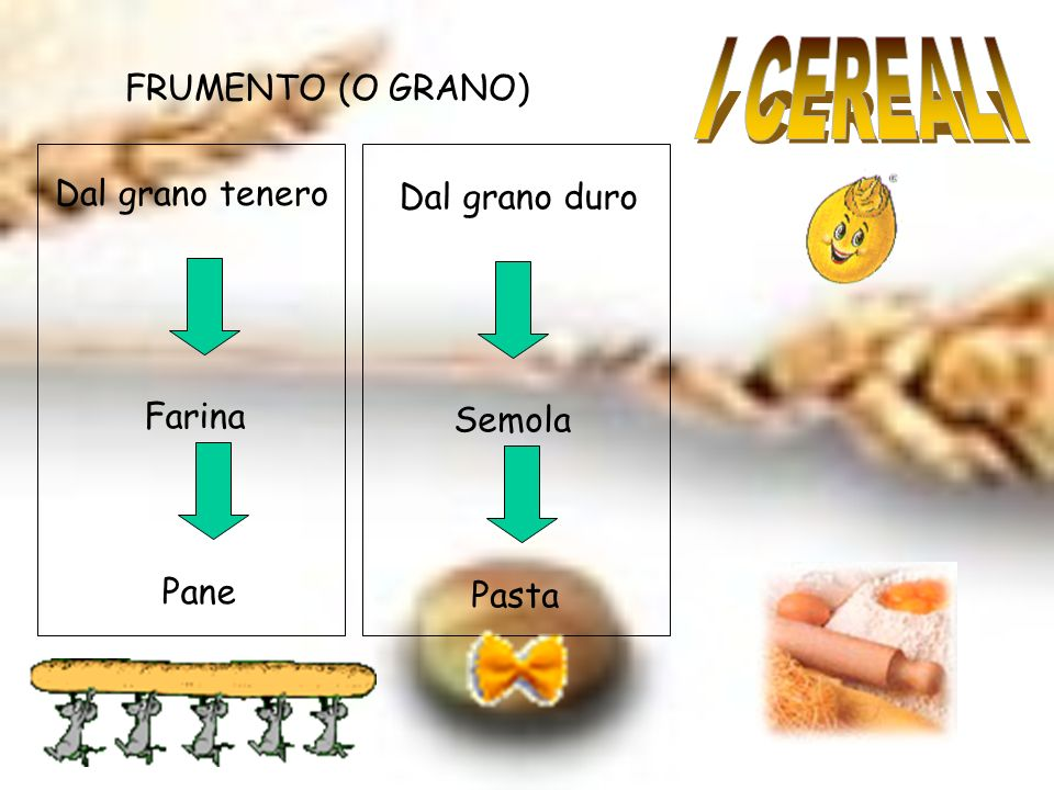 FRUMENTO (O GRANO) Dal grano tenero Farina Pane Dal grano duro Semola Pasta
