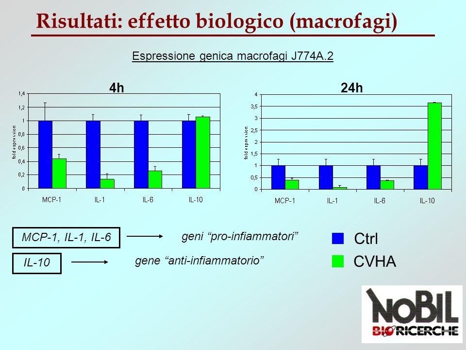 Risultati: effetto biologico (osteoblasti) Espressione genica osteoblasti SaOs-2 72h24h Ctrl CVHA ALP, BSP RANKL geni pro-osteogenici gene anti-osteogenico