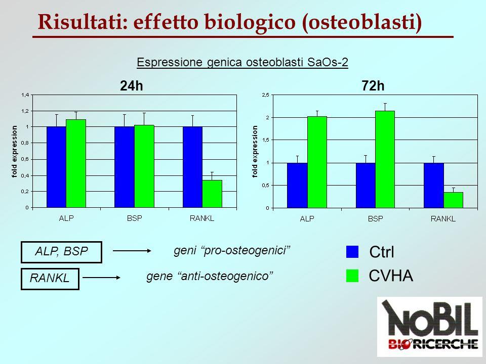 osteoblasti RANKL ALP, BSP IL-1, IL-6, MCP-1 IL-10 monociti Effetto biologico: discussione osteoclasti differenziamento La modifica CVHA sembra influenzare in vitro i meccanismi di rimodellamento osseo