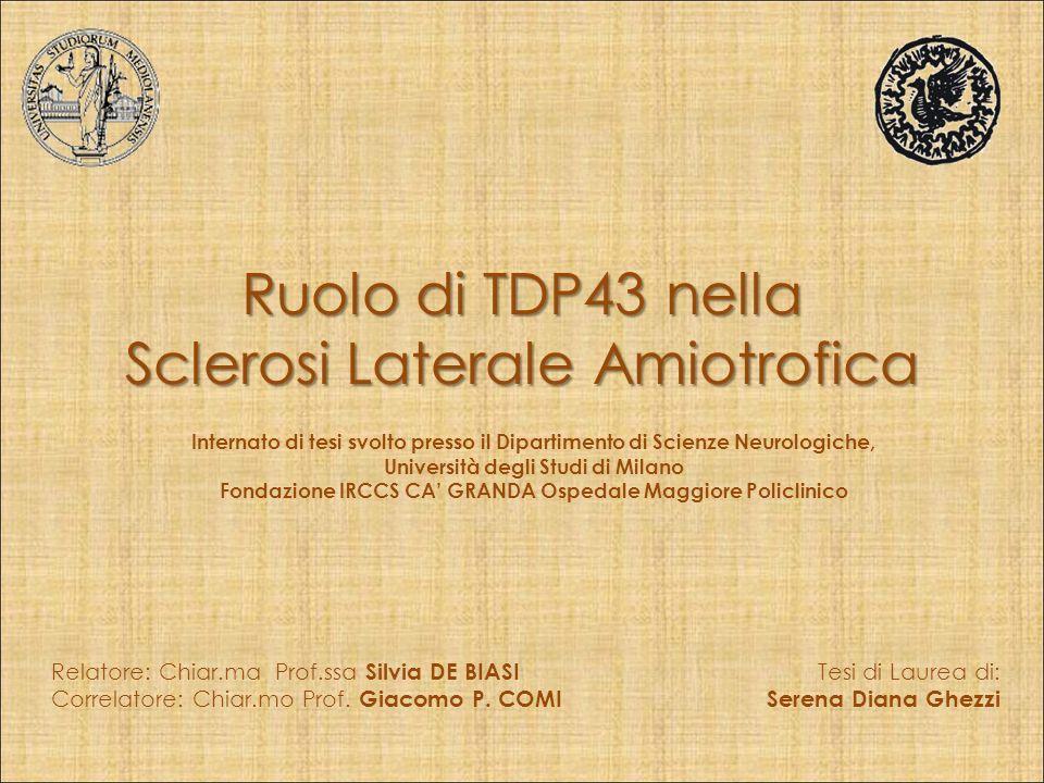 Ruolo di TDP43 nella Sclerosi Laterale Amiotrofica Tesi di Laurea di: Serena Diana Ghezzi Relatore: Chiar.ma Prof.ssa Silvia DE BIASI Correlatore: Chiar.mo Prof.