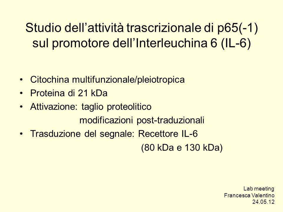 Studio dellattività trascrizionale di p65(-1) sul promotore dellInterleuchina 6 (IL-6) Citochina multifunzionale/pleiotropica Proteina di 21 kDa Attiv