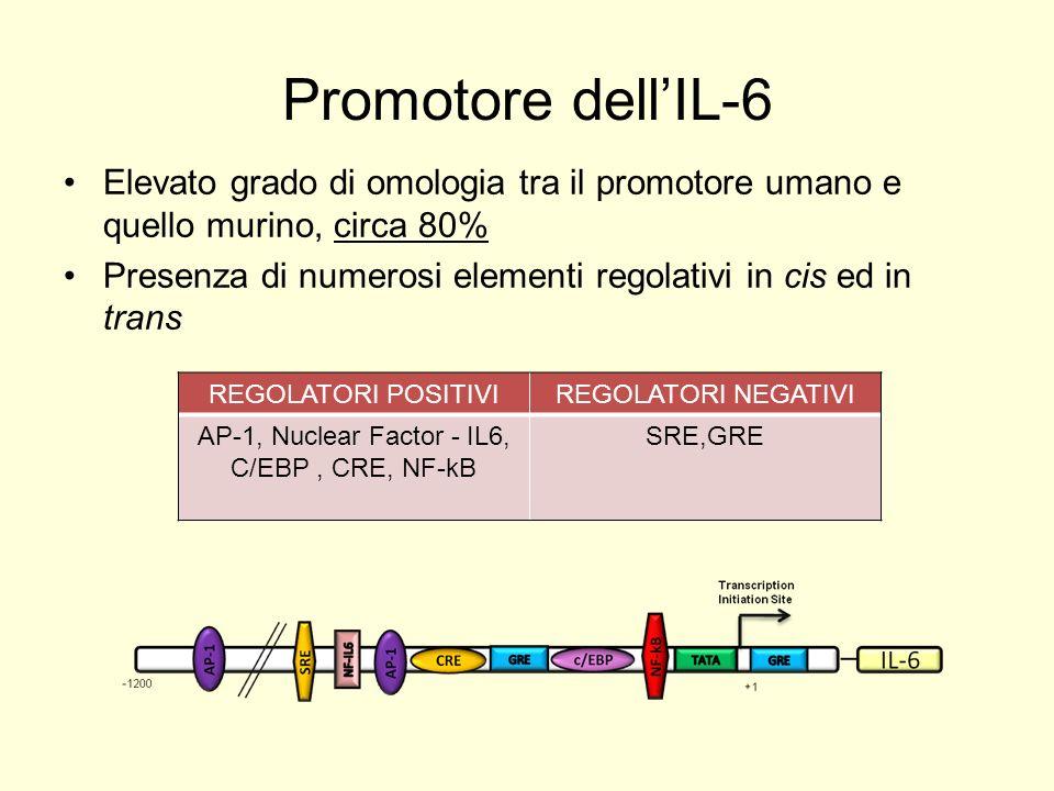 Regolazione espressione IL-6 Attivazione Inibizione diretta (quencing) / indiretta (competizione)